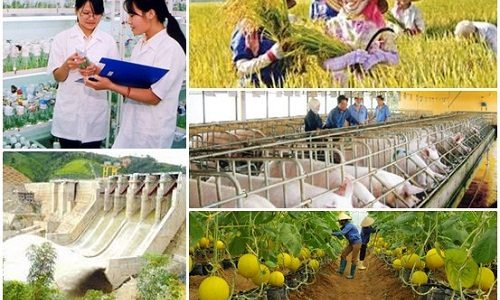 POLICY FOR INCLUDING BUSINESS INVESTMENT IN AGRICULTURE AND RURAL IN VIETNAM.
